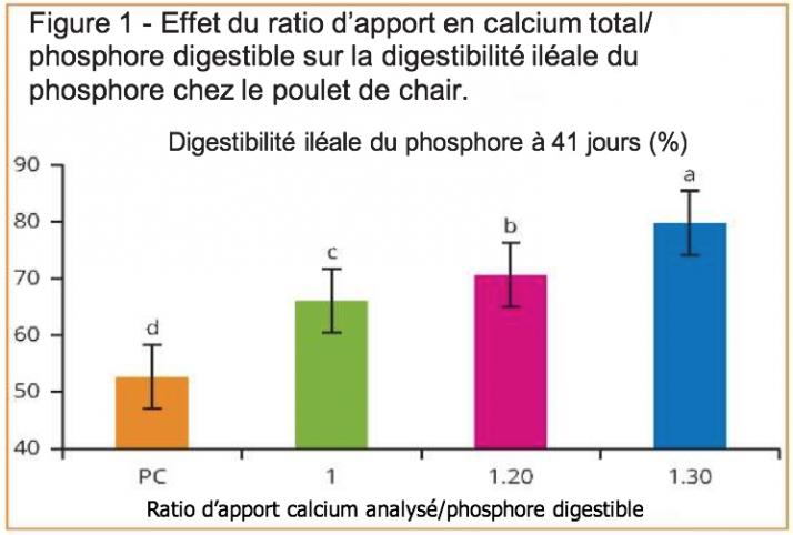 Digestibilité iléale du phosphore