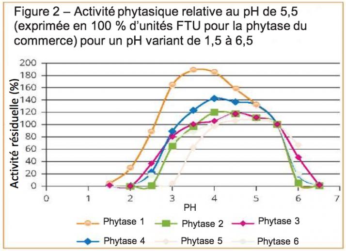 Activité phytasique