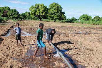 Un périmètre irrigué au sud  de Madagascar.