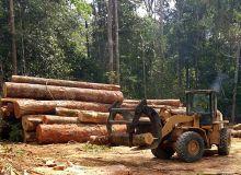 Exploitation de bois en Afrique Centrale.