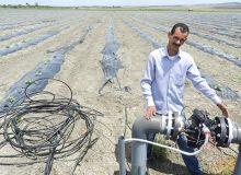 Le Fonds de développement agricole a permis la mise en place de 647 000 ha d'irrigation au goutte-à-goutte, comme ici près de Fès. Photo : Antoine Hervé