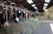 Vaches au cornadis. © M.Ballan/Pixel image