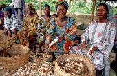 En Afrique subsaharienne, les femmes sont moins de 15% à disposer de titres fonciers, estime la FAO, comme ici au Nigeria. Photo: Daouda Aliyou