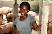 Mauricette NGuessan est responsable de l'élevage porcin du Dr Attoumbré. Photo: Antoine Hervé