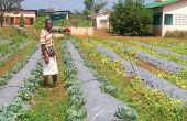 Les zones rurales sont transformées en pôles de développement économiques, comme ici à Kétou. Photo: G. C. Roko